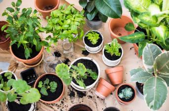apartment herb garden balcony Grow An Indoor Spice Garden ApartmentGuidecom